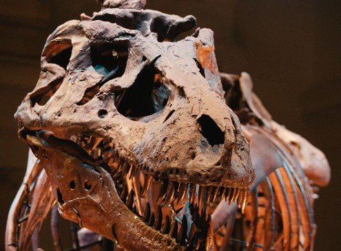 Dinosaur Discovery: Dino Eggs Took Months To Hatch, May Be The Cause Of Their Extinction