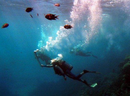 Scientists Find What Nearly Destroyed The Great Barrier Reef Decades Ago