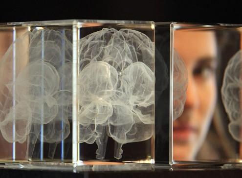 Drexel And Princeton University Researchers Study Brain Synchronization