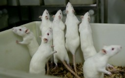 Dr. Xin-Yun Lu studied how human fat hormones help mice recover from PTSD