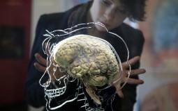 Training The Human Brain