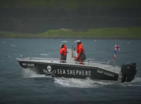 Sea Shepherd Wants Denmark Charged For Mass Pilot Whale Slaughter [VIDEO]