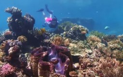 Biodiversity in The Great Barrier Reef