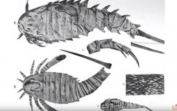 Ancient Sea Scorpion Used Sword Tails For Fights