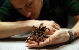 Tarantulas Are Good For The Heart