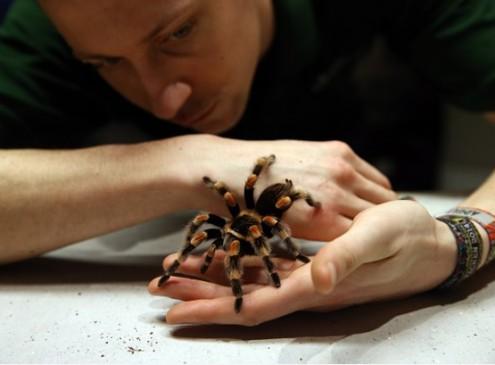 Harvard Study Shows Tarantulas Hold The Secret To A Healthy Heart [VIDEO]