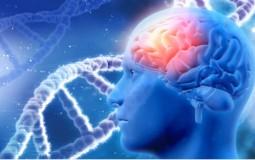 The Human Brain And Memories