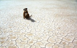 dog in the drought