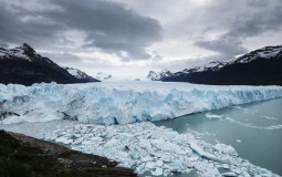 patagonian field