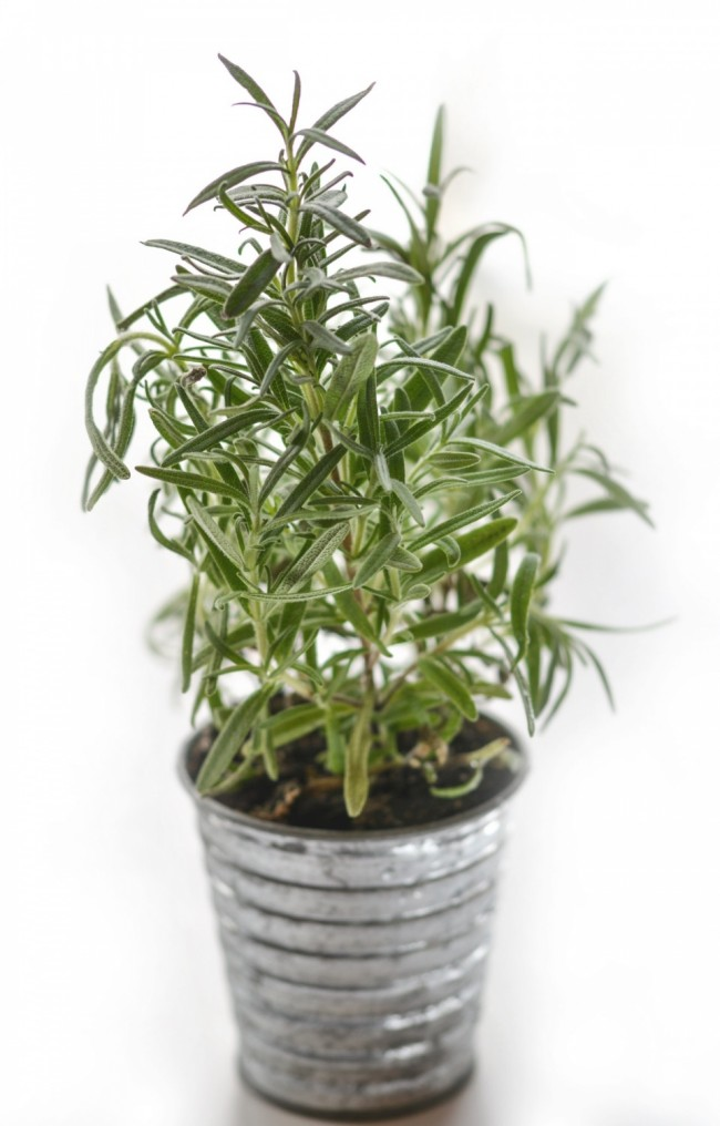 Stop Acne and Prevent Hair Loss Using Thyme Oil