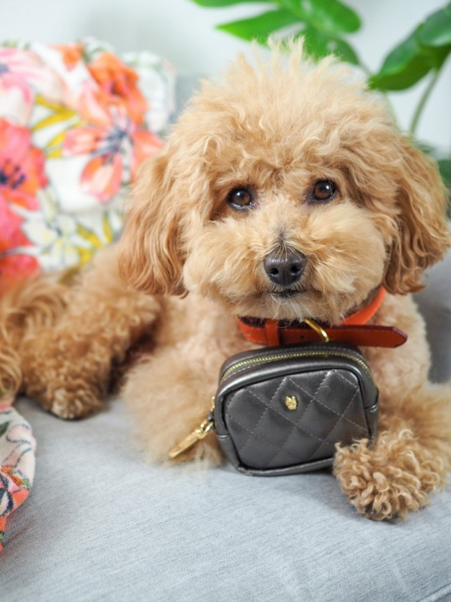 The Success Story Behind Pet Accessory Brand Pink Papyrus