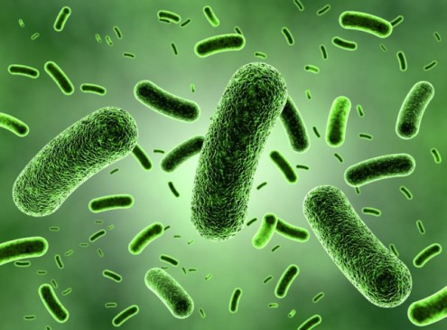 Gut Bacteria Protects Against Food Allergies, Study